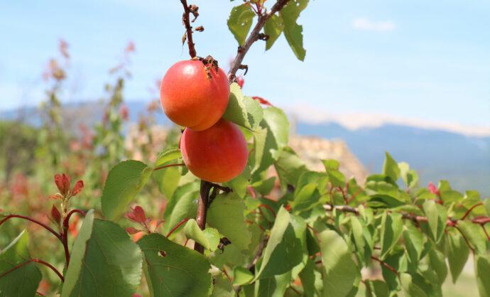 Pommes @ Gillet