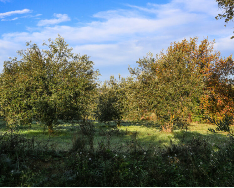 La Bastide du Laval: visit of an olive oil mill and olive oil tasting in southern Luberon