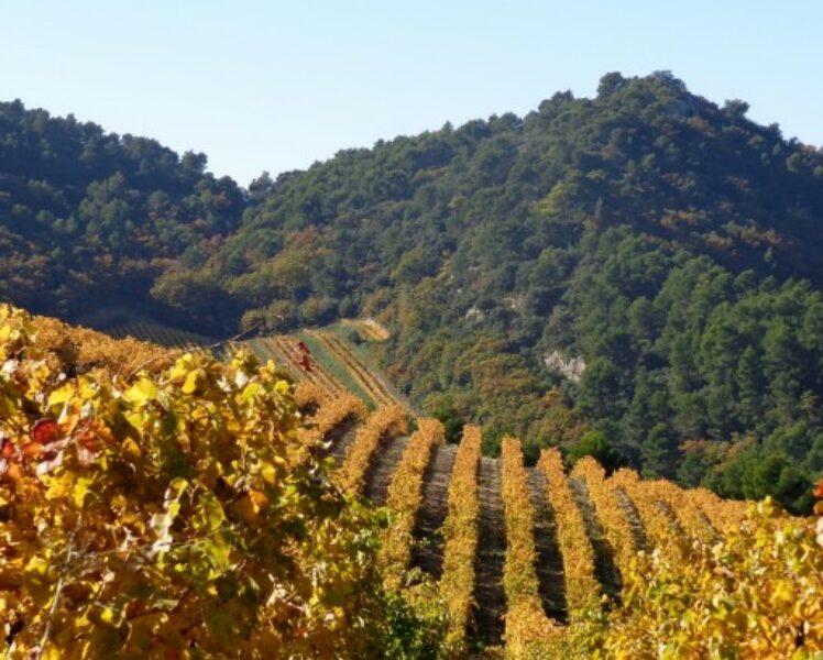 Wine tourism in the Dentelles de Montmirail with Rhonea