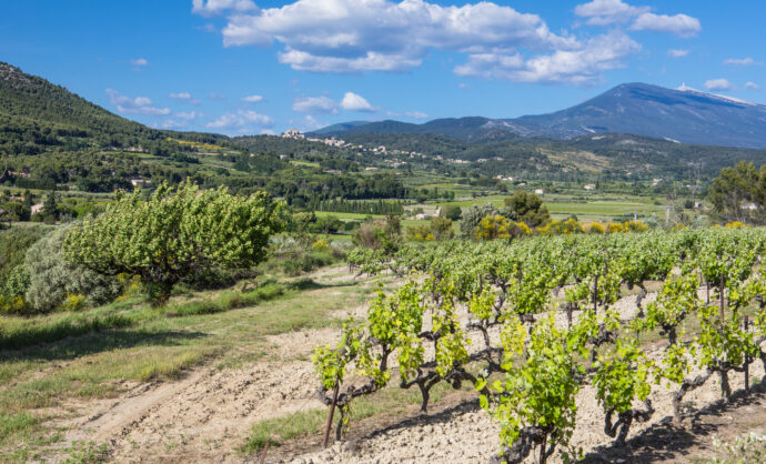 Vineyards of the Ventoux
