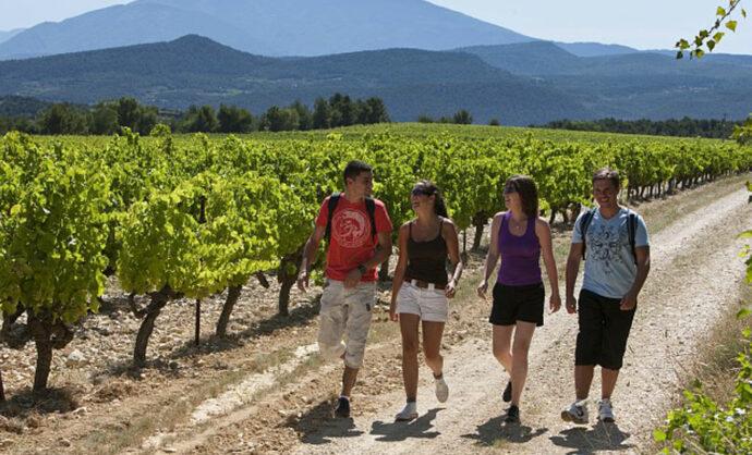 Hiking throught the vineyards