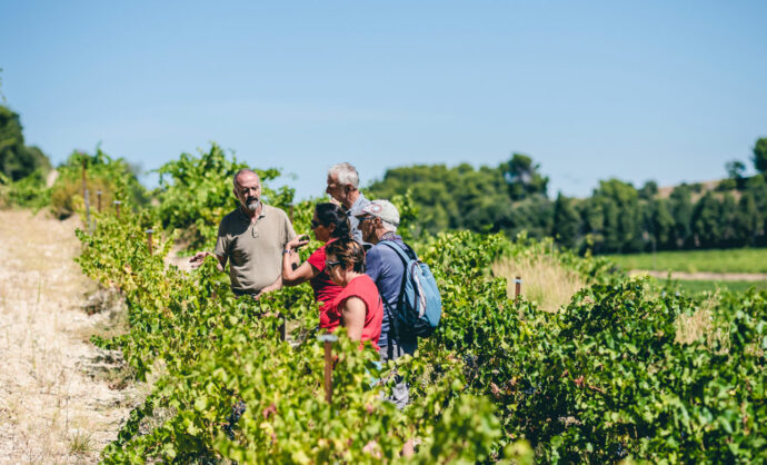 Vineyards guided tours in Provence