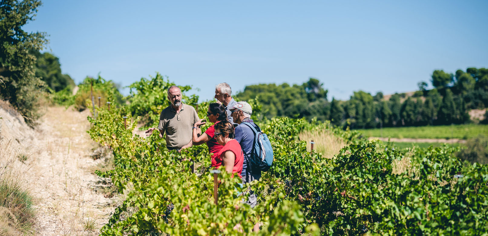 Vineyards guided tours in Provence © O'Brien
