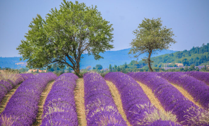 A weekend in lavender country