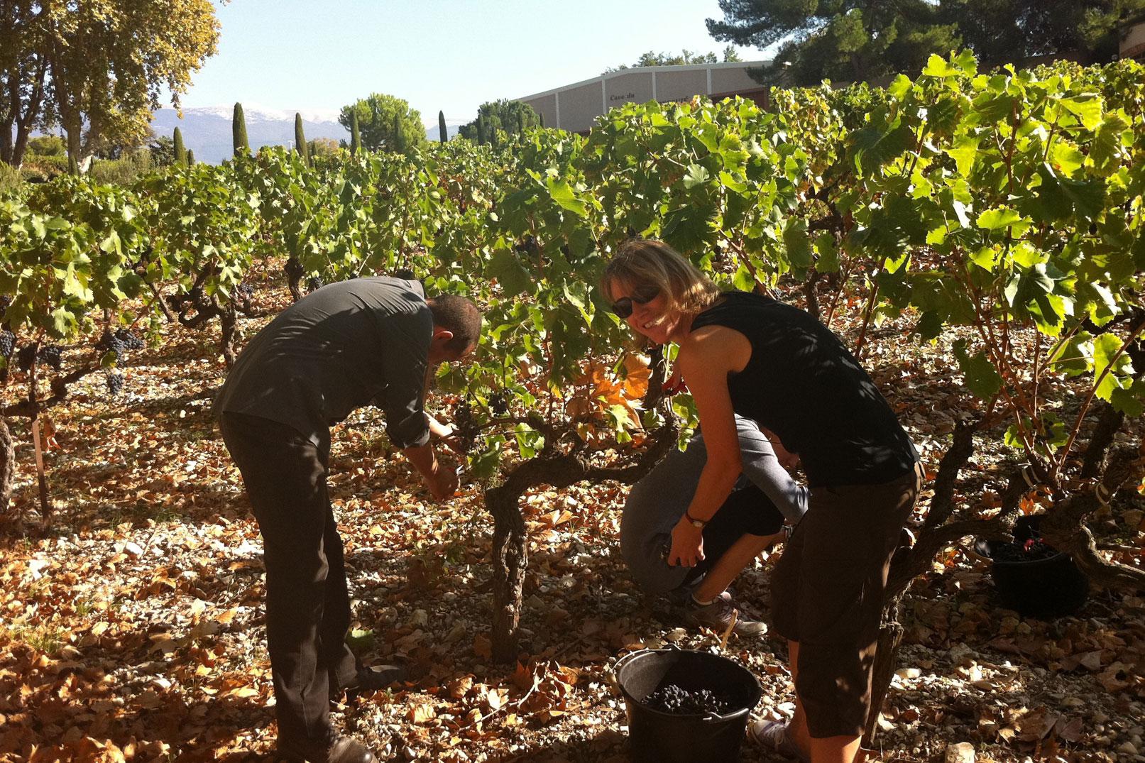 Attend grape harvest © Gillet