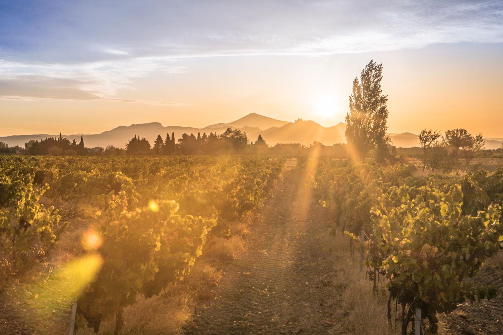 vineyards © Kessler